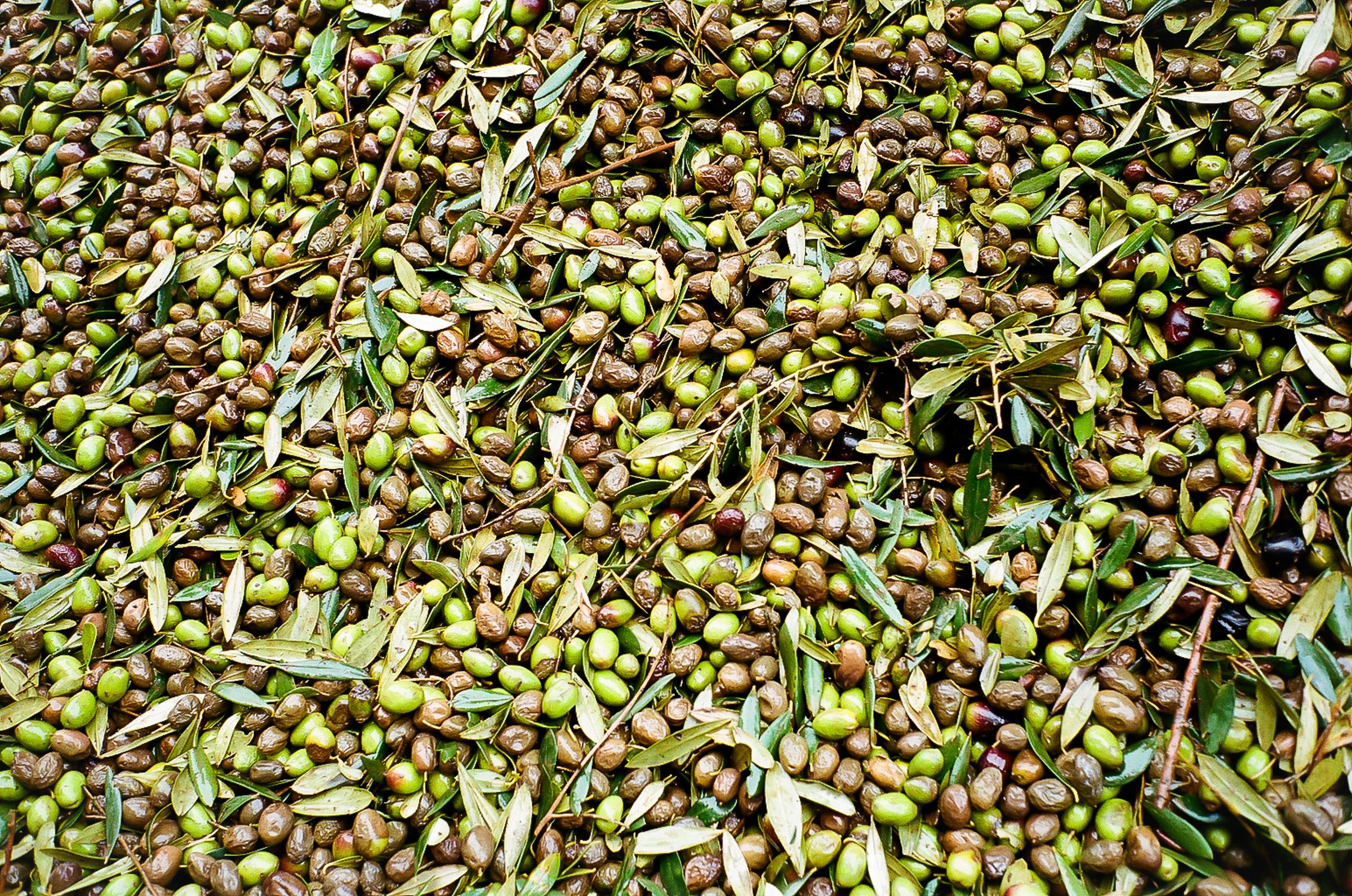 alentejo-olive-oil